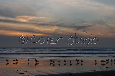 Ocean Birds at Pajaro Dunes, California