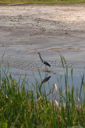 Ocean Birds at Pawley's Island