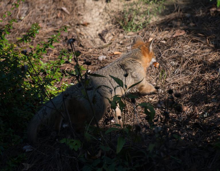 LG-Fox-_DSC1524