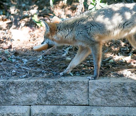 LG-Fox-_DSC1544