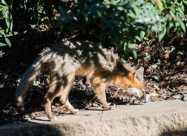 LG-Fox-_DSC1541