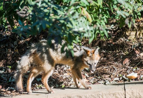 LG-Fox-_DSC1542