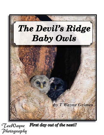 Click to order your BOOK now  What follows are just a few of the photos I used in the book just to tease you!!  :>) TeeWayne Photography provides Fine Art Photography of amazing baby owls in Holly Springs, NC