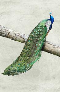 Turquoise pride