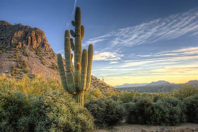 Overlook Saguaro