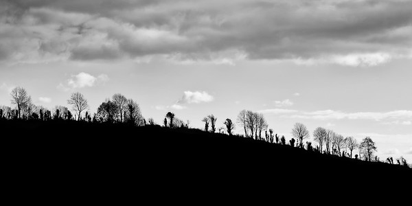 Senty trees on a ridge in Ireland