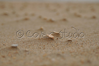 Bits of Seashell on Sand