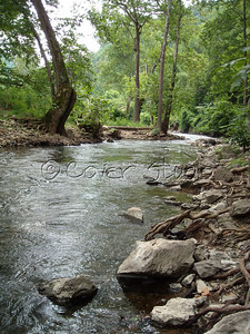 Wooded Creek