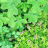 Garden Serenade [4900-10]