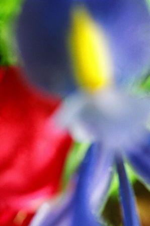 Sunbeam Iris [6849-06]