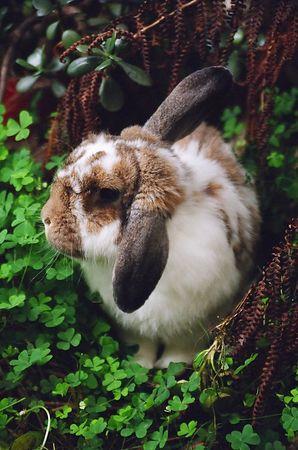 Bonzai Bunny [5794-19]