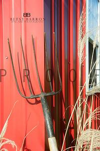 wm20081214-_MG_4654pitchforkwheat
