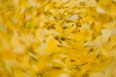 leavesaspaintbrush