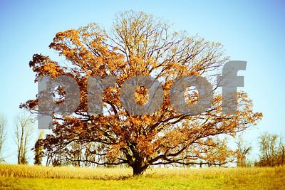 fall giant