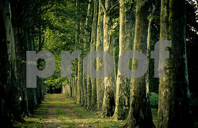 walkinthewoods3