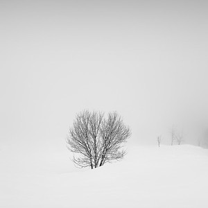 A tree in snow.