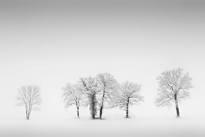 Snowy trees - 1st Place Winner IPA 2012