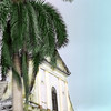 16x24 palm tree tint