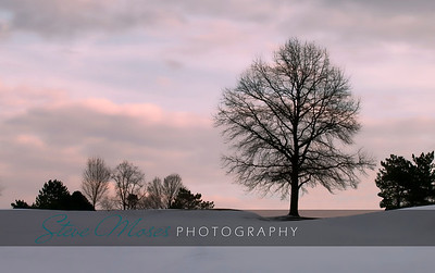 """""""Standing Tall"""" First Place - HVPPSNY Print Competition Location: Stony Ford - Orange County Park"""