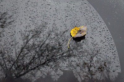 Leaf on car window