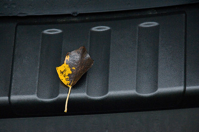 Leaf on car bumper