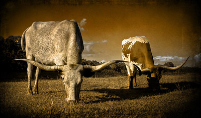 Double Steer