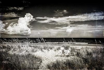 Beach Day Drama
