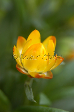 A flower, the color and smell of nature