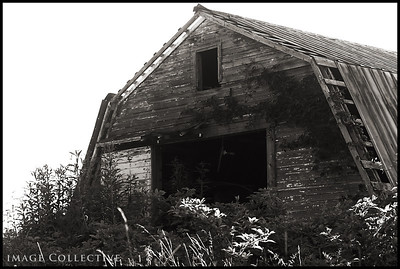 The barn behind Lacey's house.