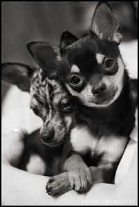 Jake and Elwood, Heather Coffey's puppies.