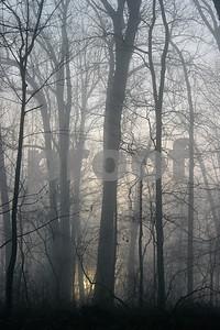 fogandlight2