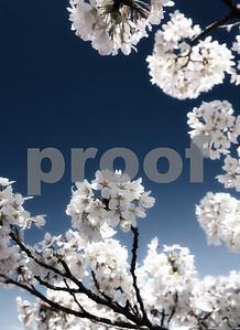 'Blooms Away'