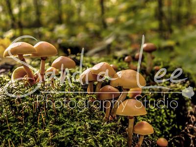 Mushroom Village #2