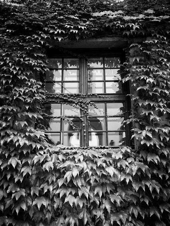 Mikulov Leaves