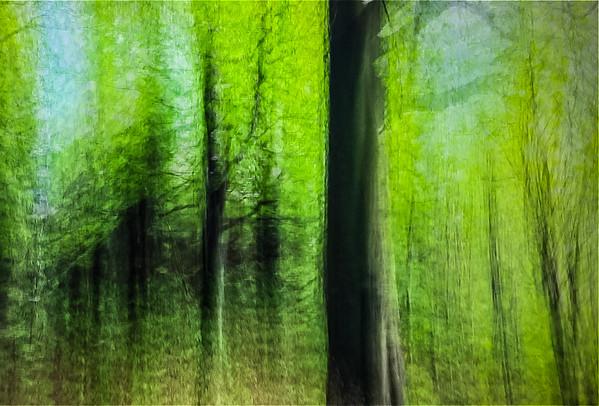 Liberec Forest