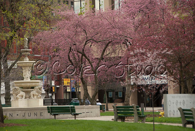 Johnstown Central Park in Spring