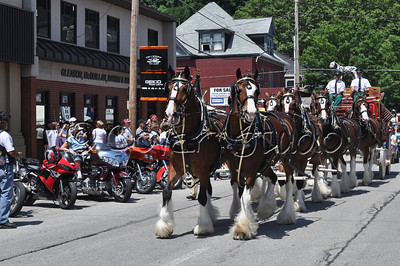 Budweiser Clydesdales Horse