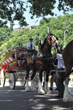 Budweiser Clydesdales at the Incline