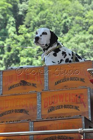 Budweiser Dalmatian