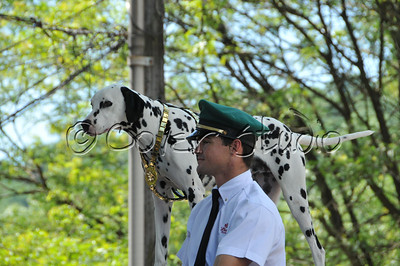 Budweiser Driver and Dalmatian