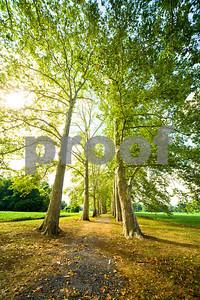 walkinthewoods1