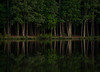 Big Lake Reflection