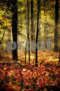 forestglow