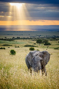 The African Savannah