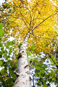 Yellow Tree Plate 2
