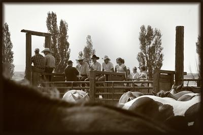 Helmsville Rodeo 104