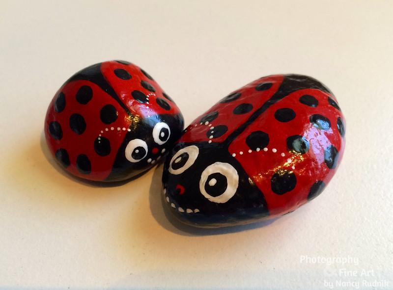 Rocks_Ladybugs_IMG_2905