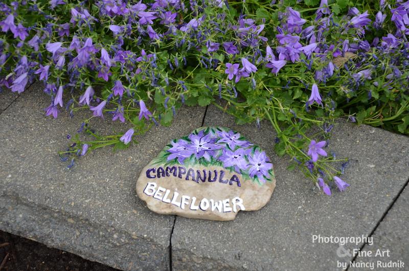 Bellflower Garden rock