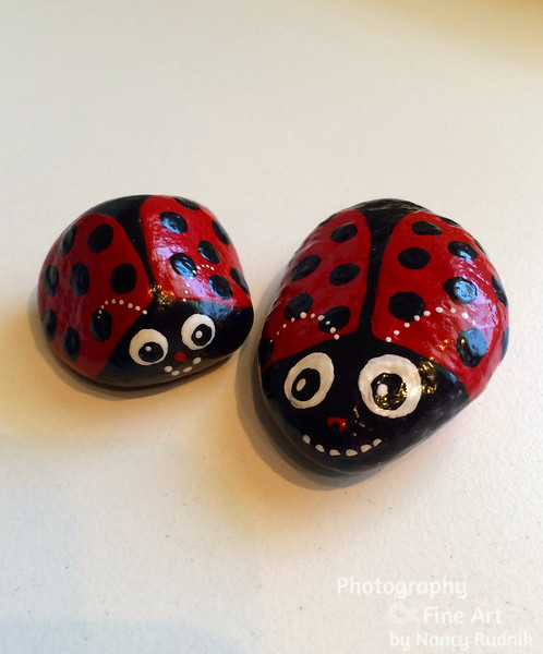 Rocks_Ladybugs_IMG_2904