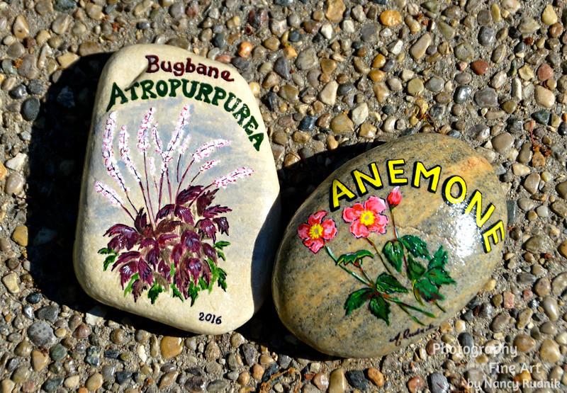 Garden rocks - flower identifiers DSC_6495